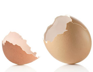 cracked egg shells