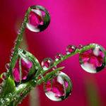 pink flower dewdrops